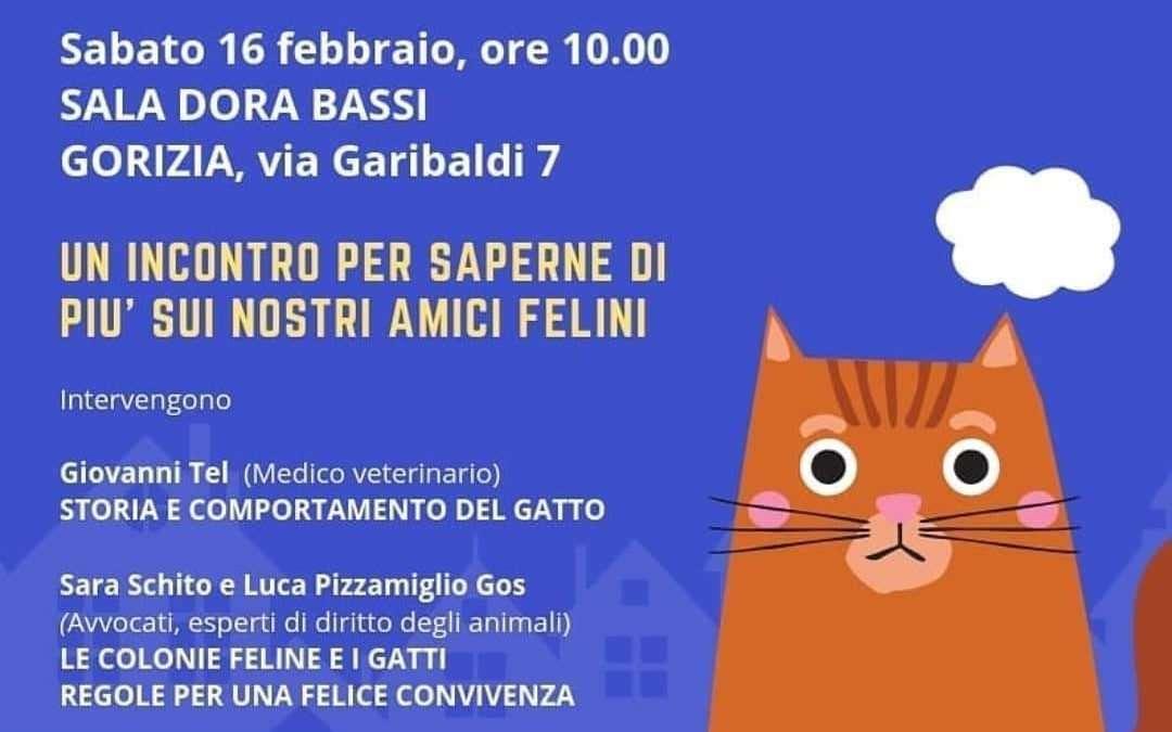 Giornata internazionale del gatto: quando, dove e con chi