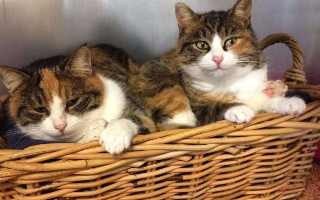 Open day al rifugio gatti